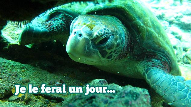 plongée aux Galapagos, pleindetrucs.fr